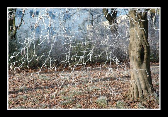 Frostige Verästelung
