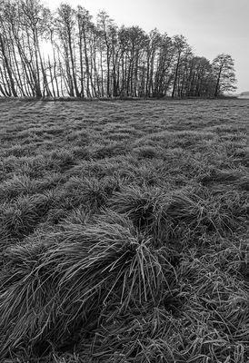 Frostige Wiese