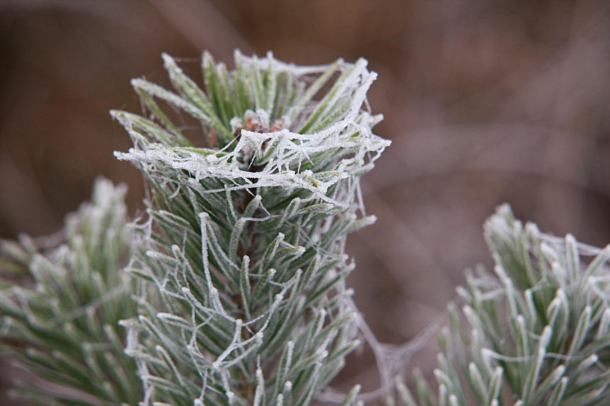 Frostige Zeiten .