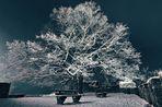 Frostiger Baum auf der Hohenburg