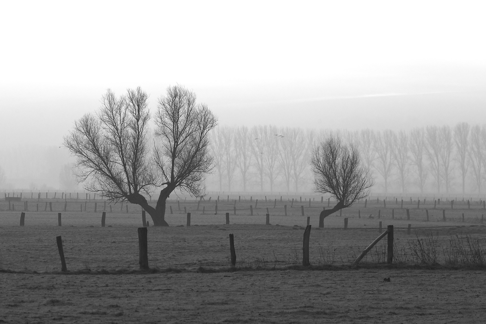 Frostiger Nebelmorgen 2