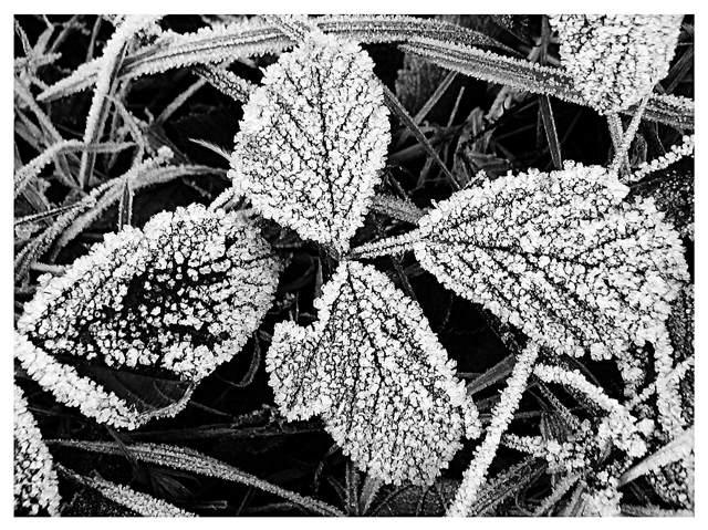 Frostiges