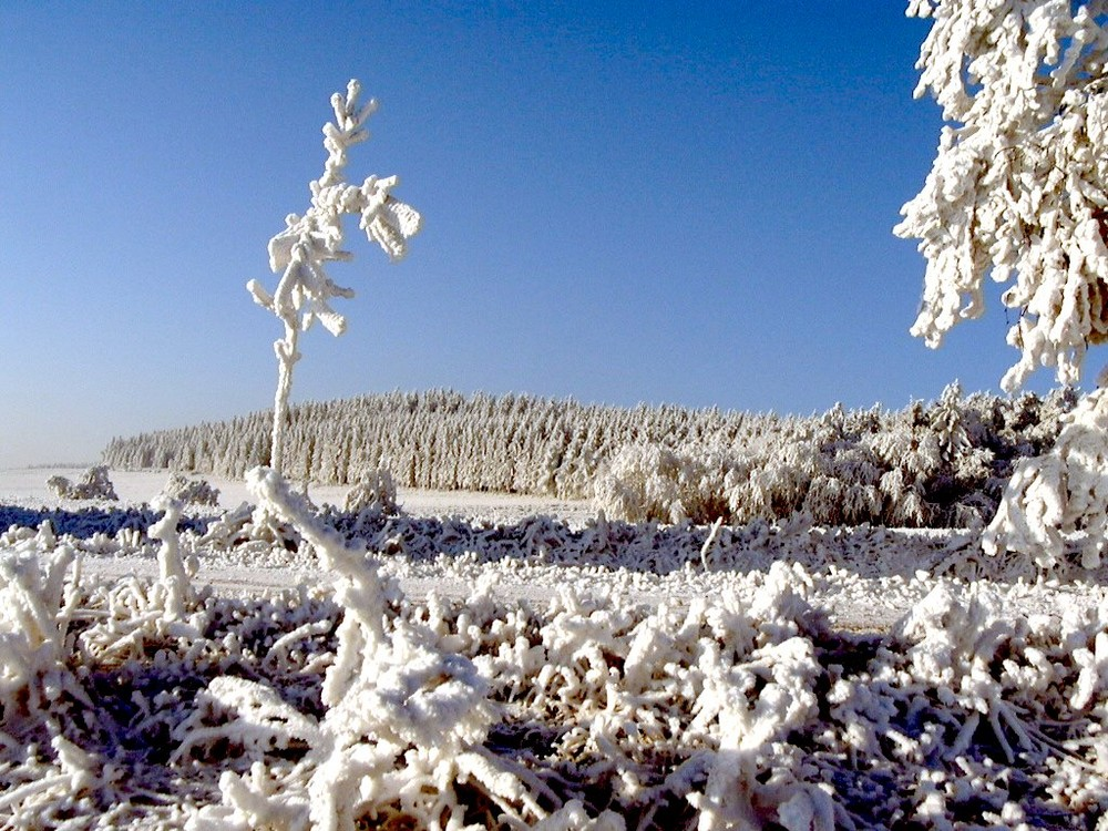 Frostiges Eiskleid