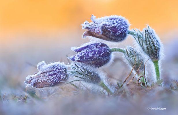 Frostiges Erwachen
