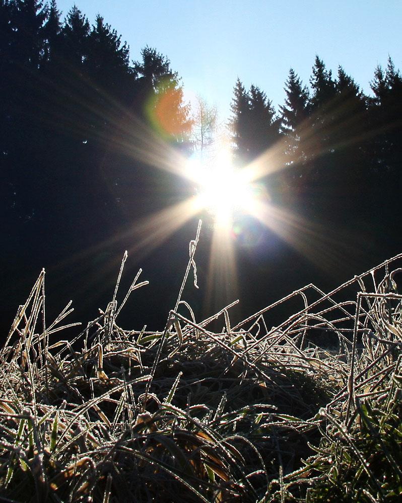 Frostiges Gras im Gegenlicht