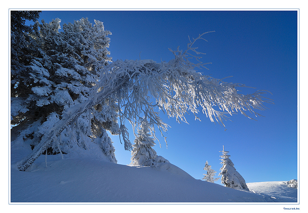 ~~~ Frostiges Naturkunstwerk ~~~