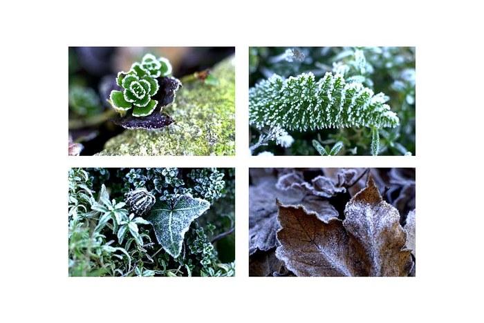 frostmalereien