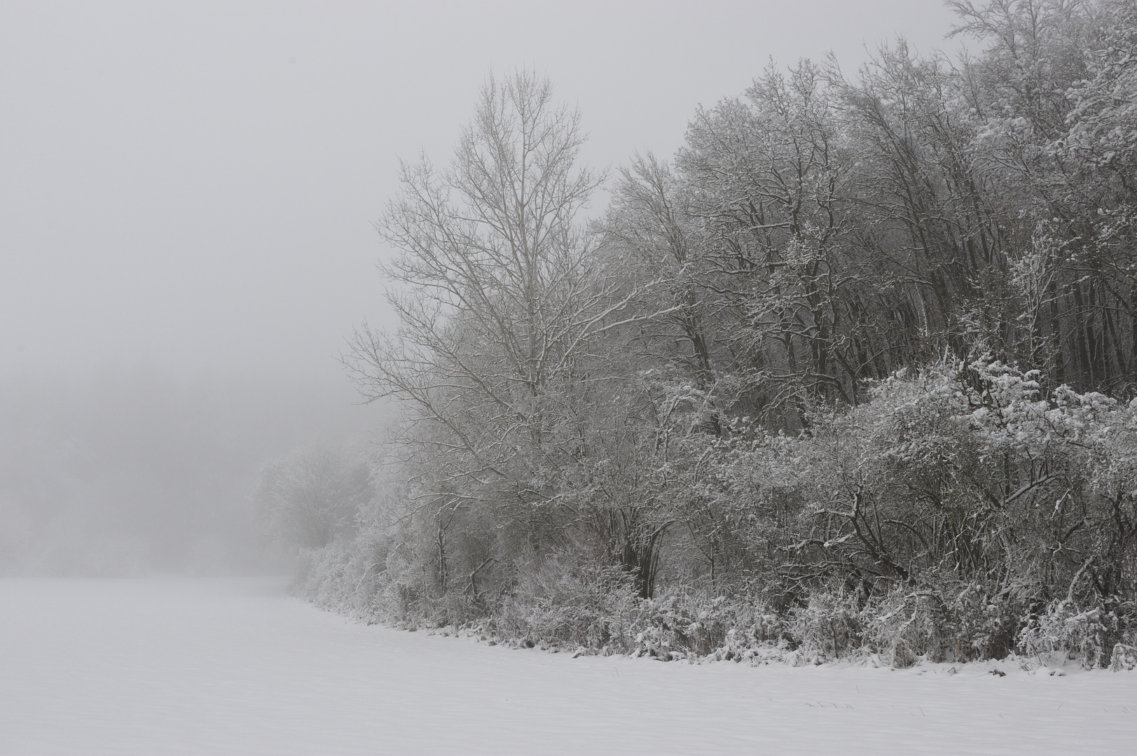 Frostnebel
