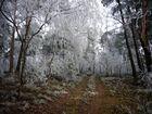 Frostweg