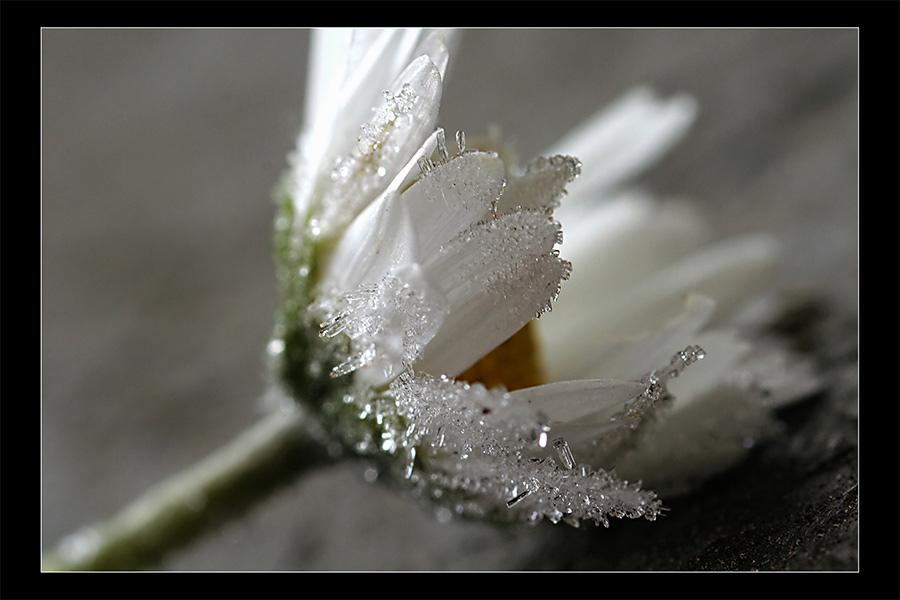 frosty *4 von Rena T.