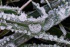 Frosty Times