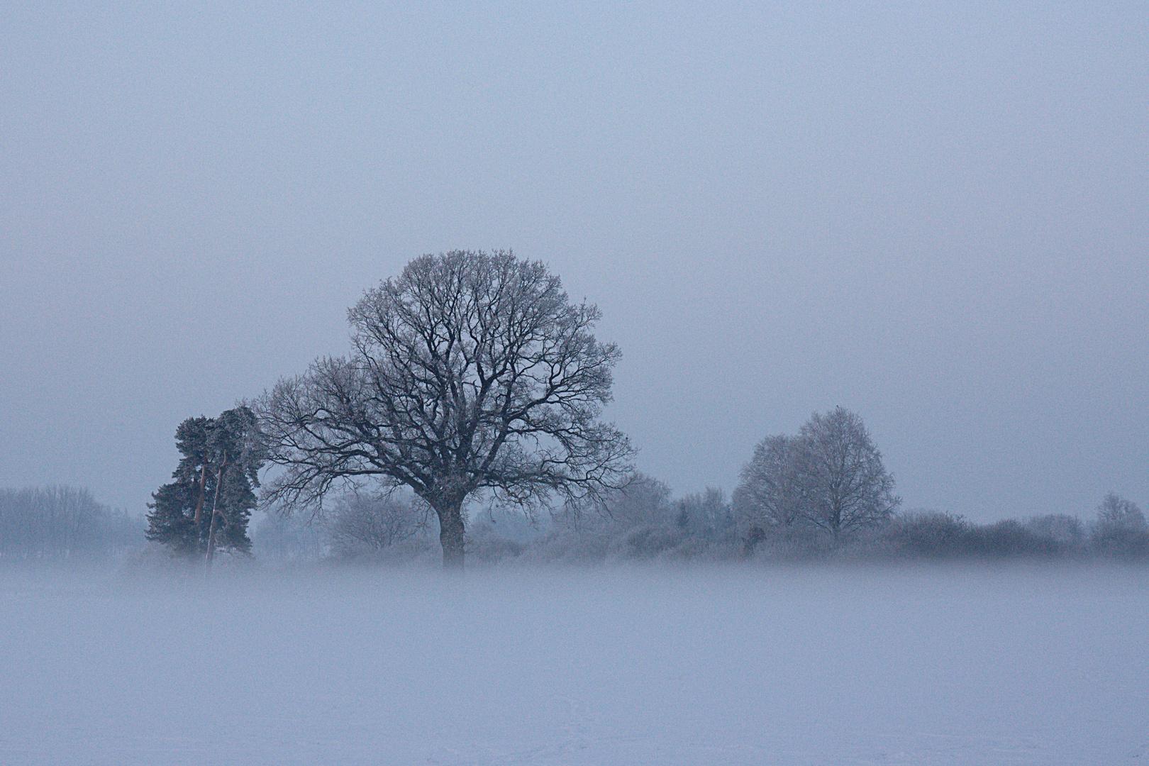 Frosty Tree2