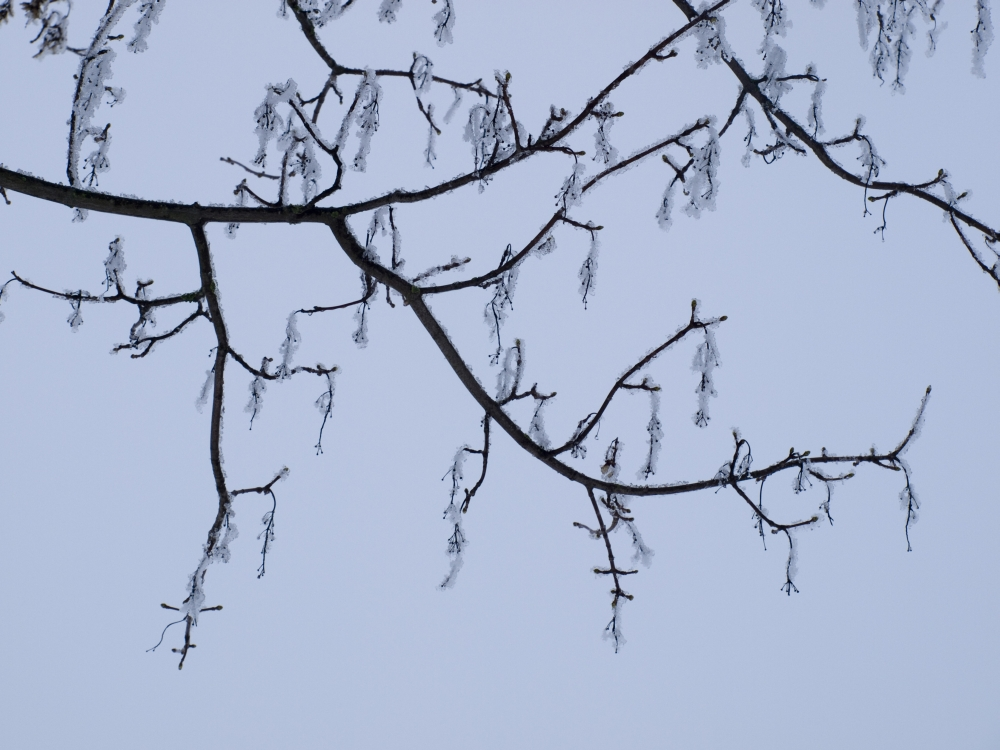 Frosty_01