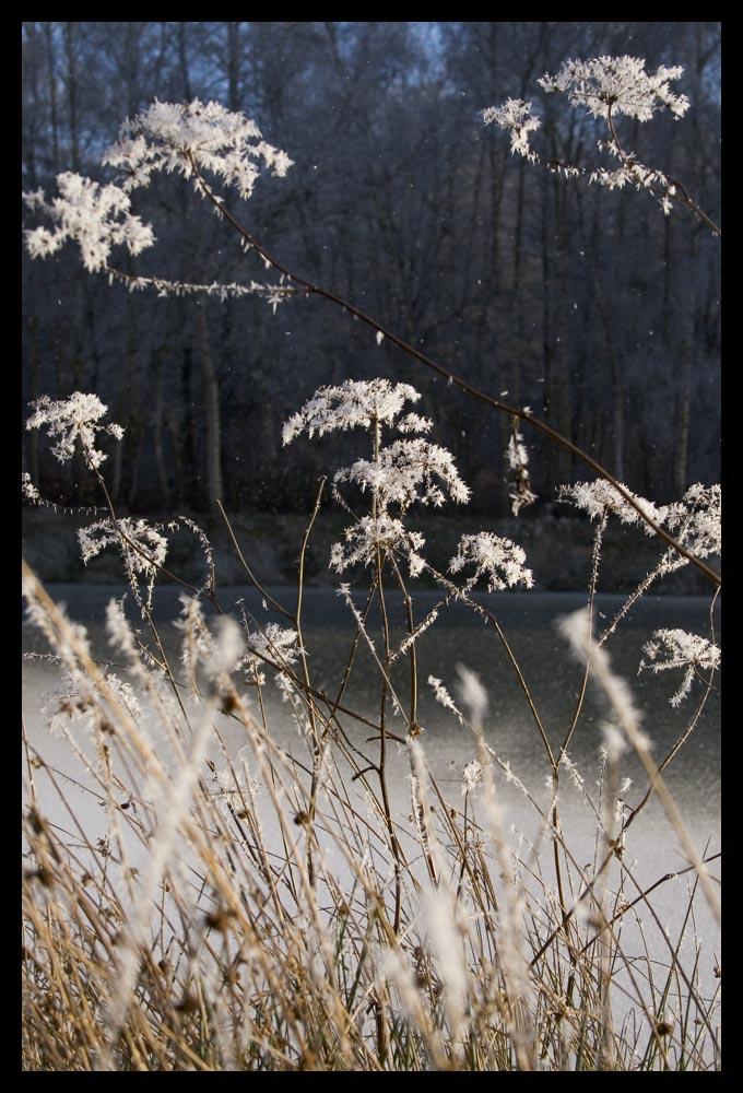 Frostzeit 07 (1)