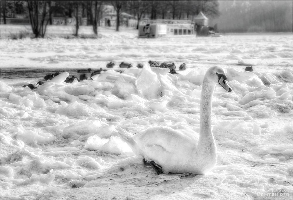 | frozen |