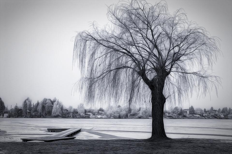 .:: Frozen Lake B/W •Illustriert• ::.