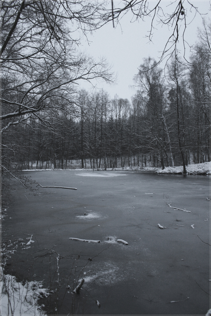 Frozen Lake in a Forest