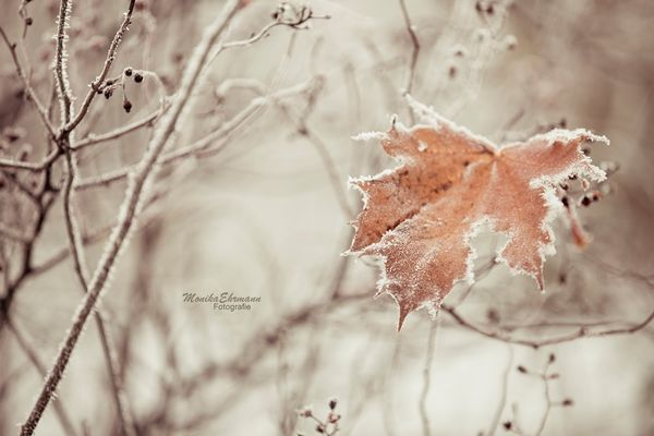 .frozen leaf.