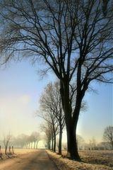 * frozen * morning *