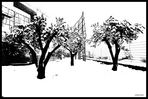 Frozen Olive Grove