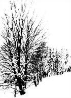 Frozen (Pinhole)