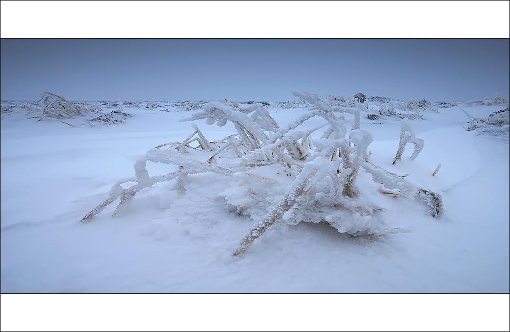 [ ... frozen spider ]