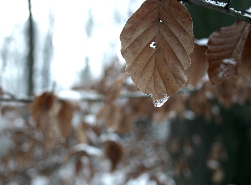 frozen teardrop