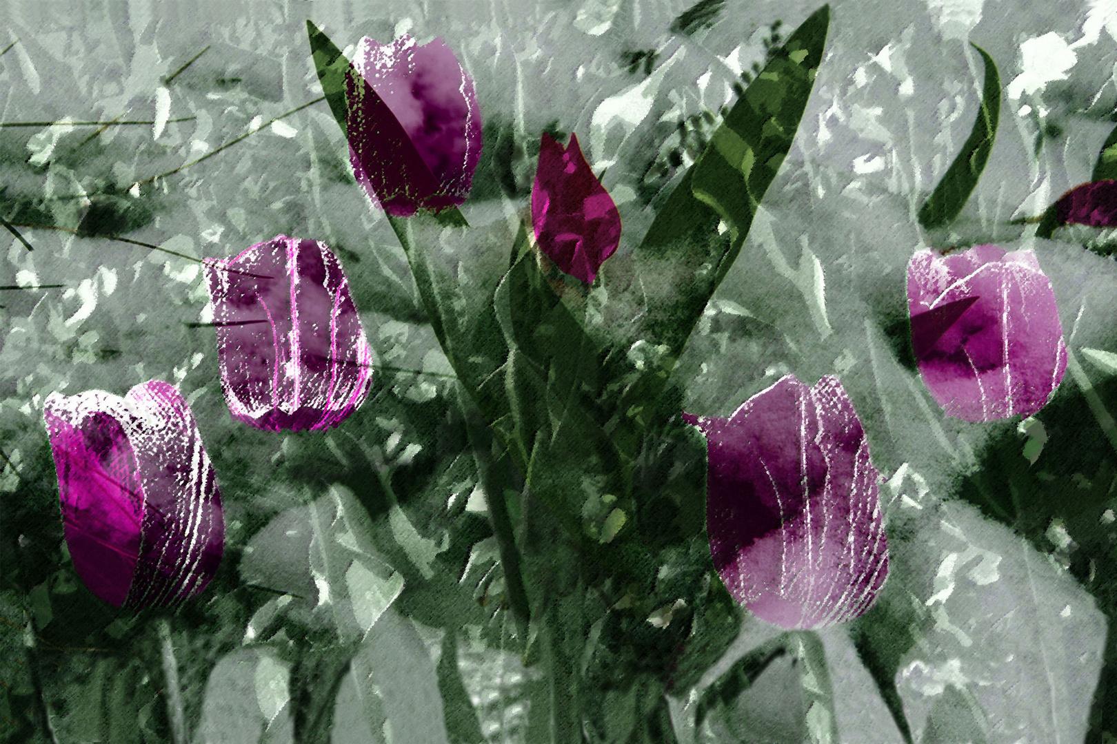 Frozen tulips