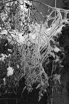 Frozen VII