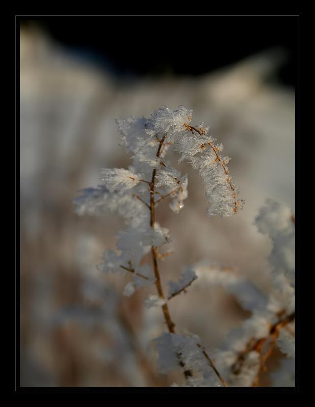 *Frozen World* [#1]