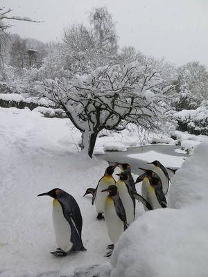 Frozen Zurigo