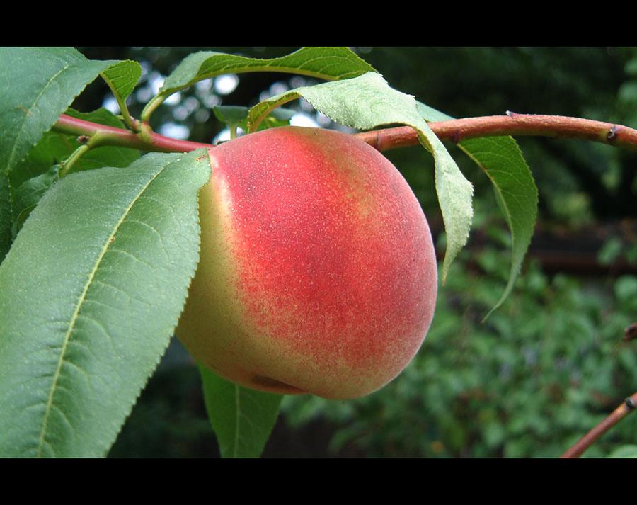 Fruchtig Reif