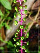 Früchte des Dschungel 3..................
