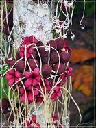 Früchte des Dschungels 1..........................