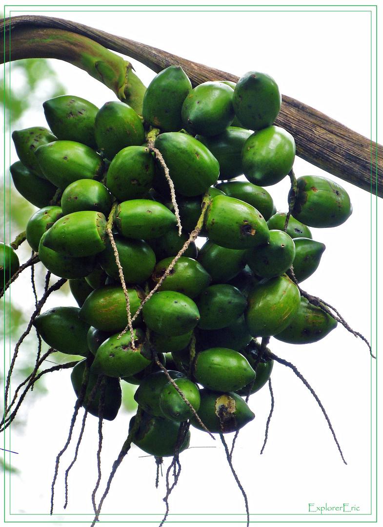 Früchte des Dschungels 2.........................