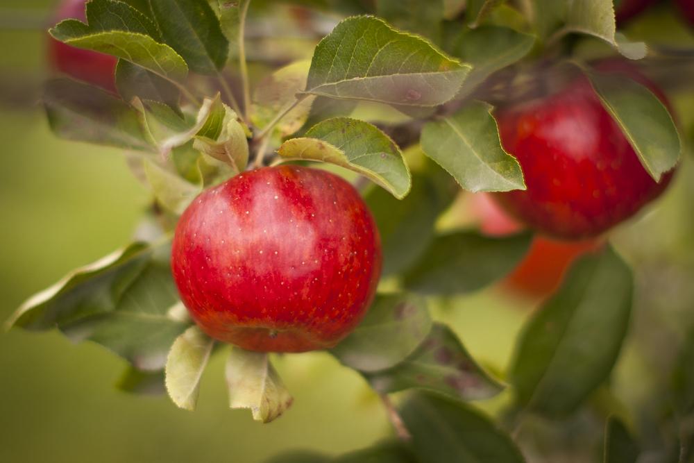 Früchte des Herbst1