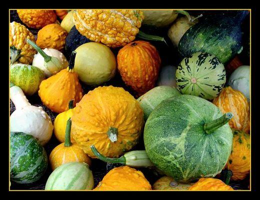 Früchte des Herbstes