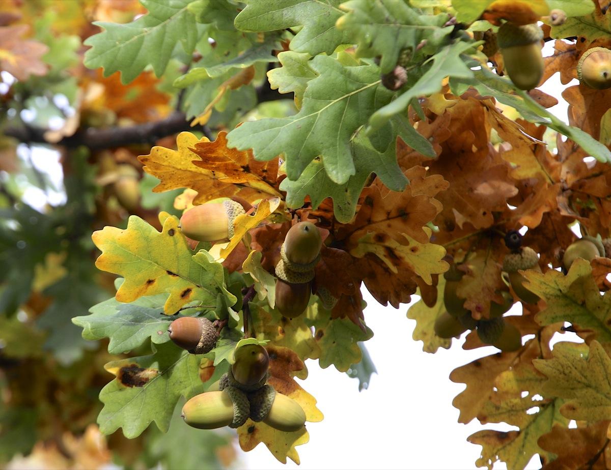 Früchte des Herbstes I
