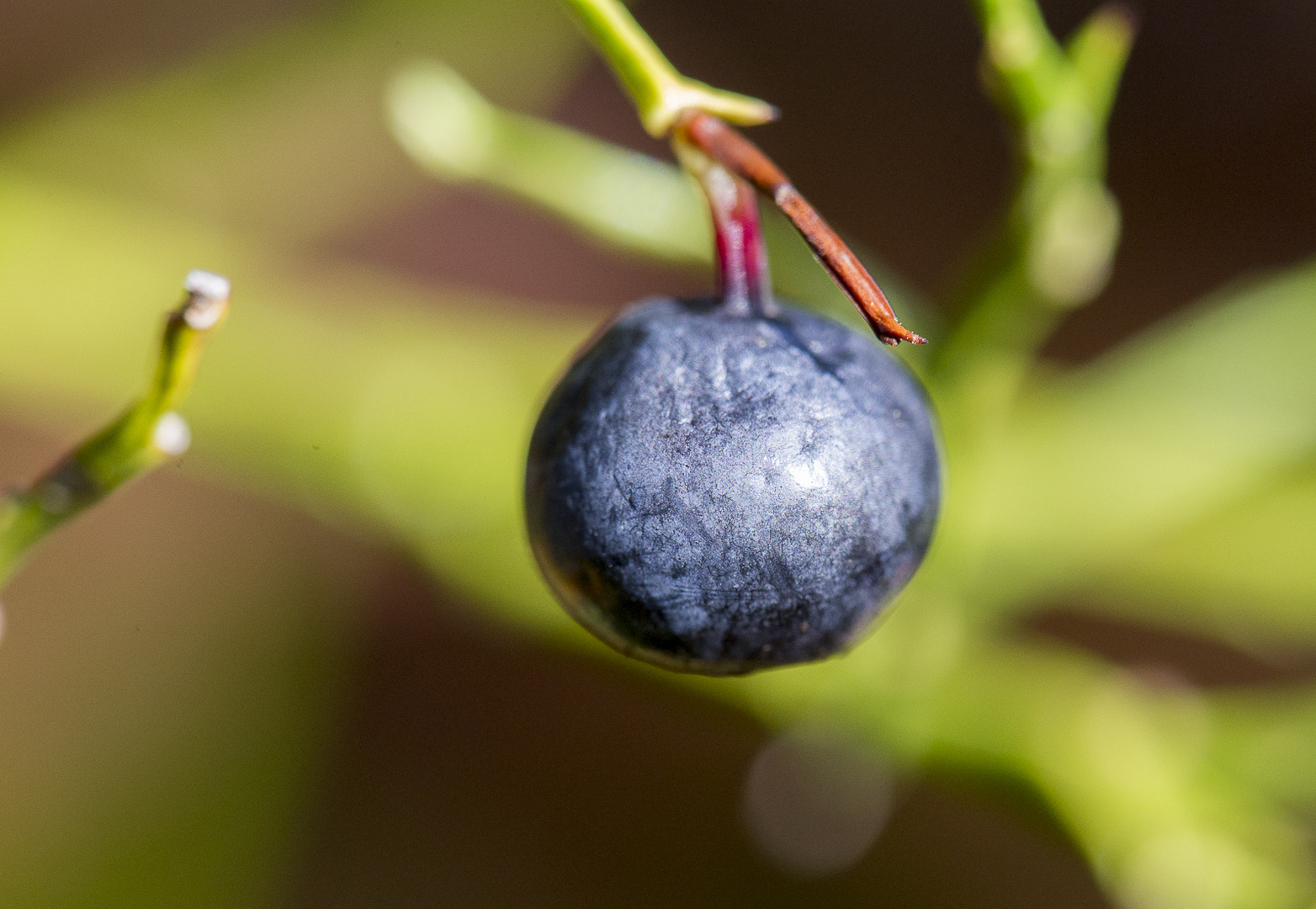 Früchte des Herbsts I