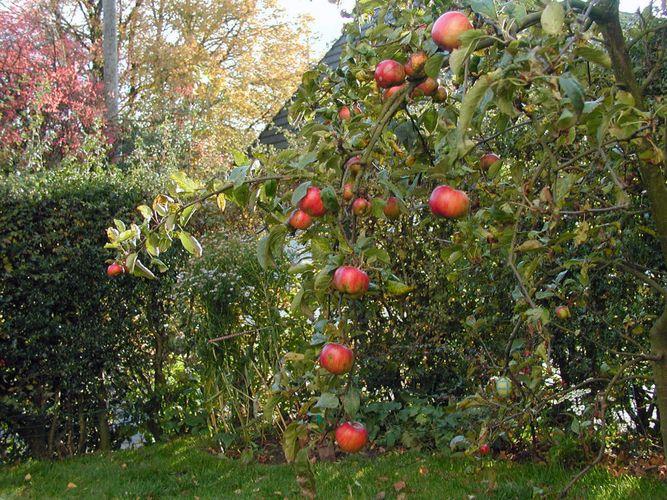 Früchte des Sommers