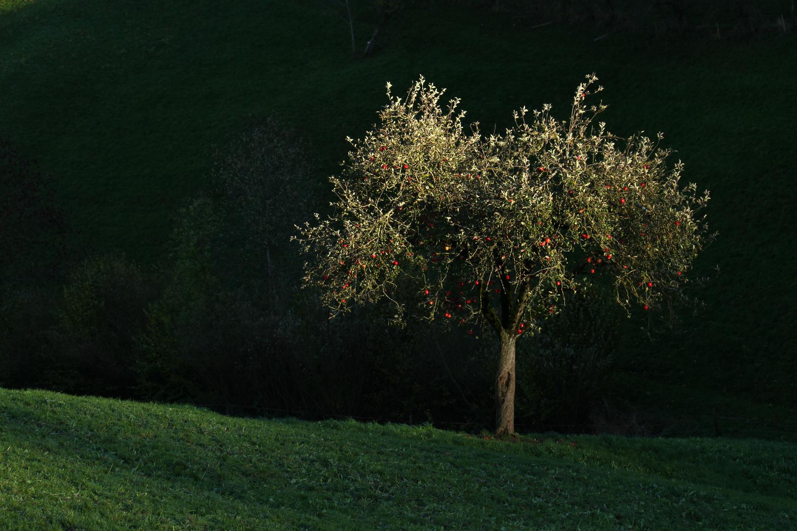 Früchte des verbotenen Baumes