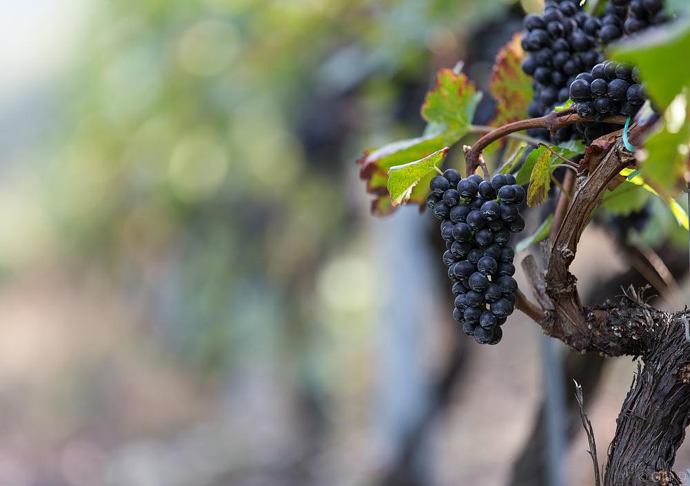 Früchte des Wallis