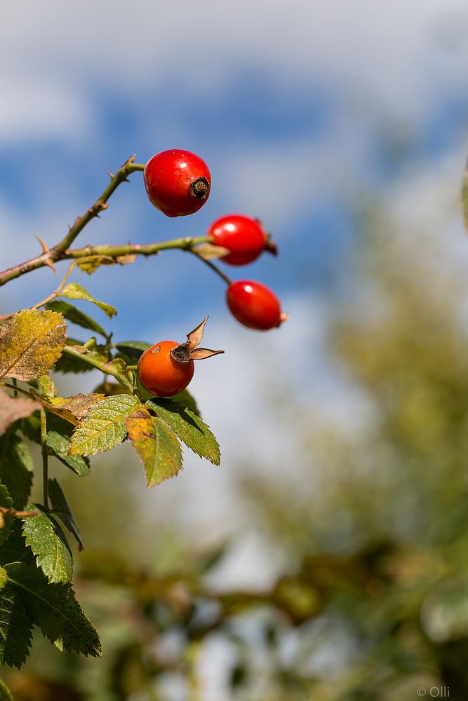 Früchte im Herbst ...