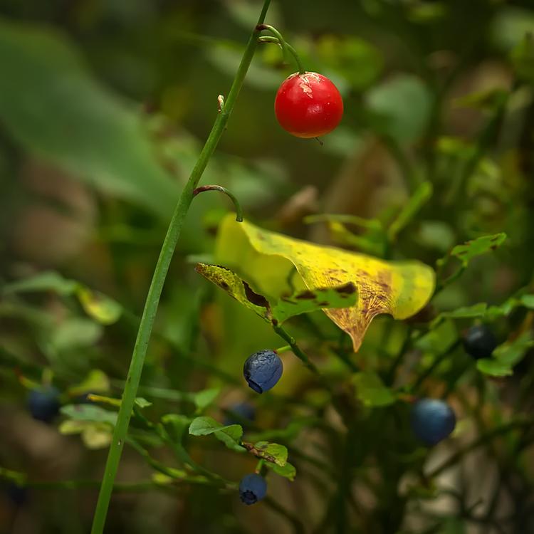 Früchte im Unterholz
