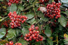 Früchte mit Perlenkette...