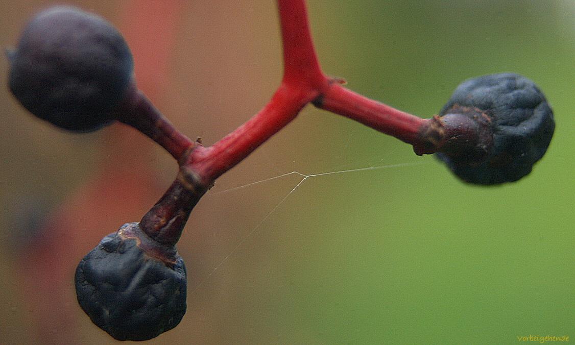 Früchte und Samen II