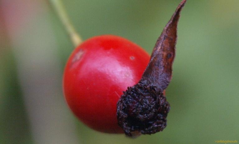 Früchte und Samen IV