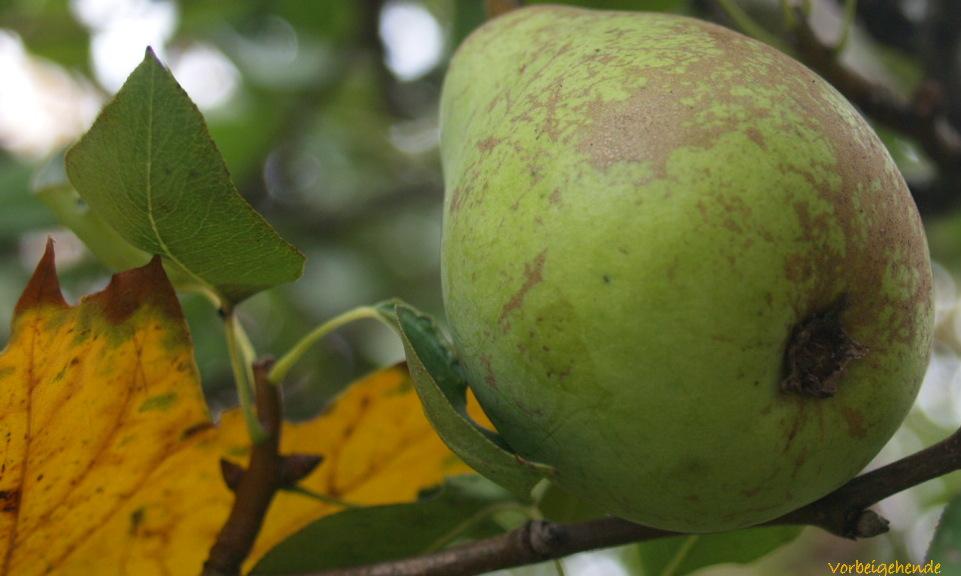 Früchte und Samen VII