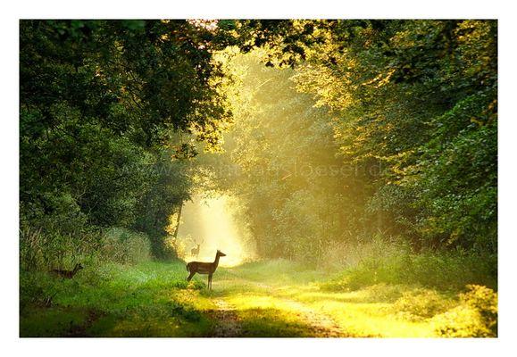früh im Wald bei Zingst