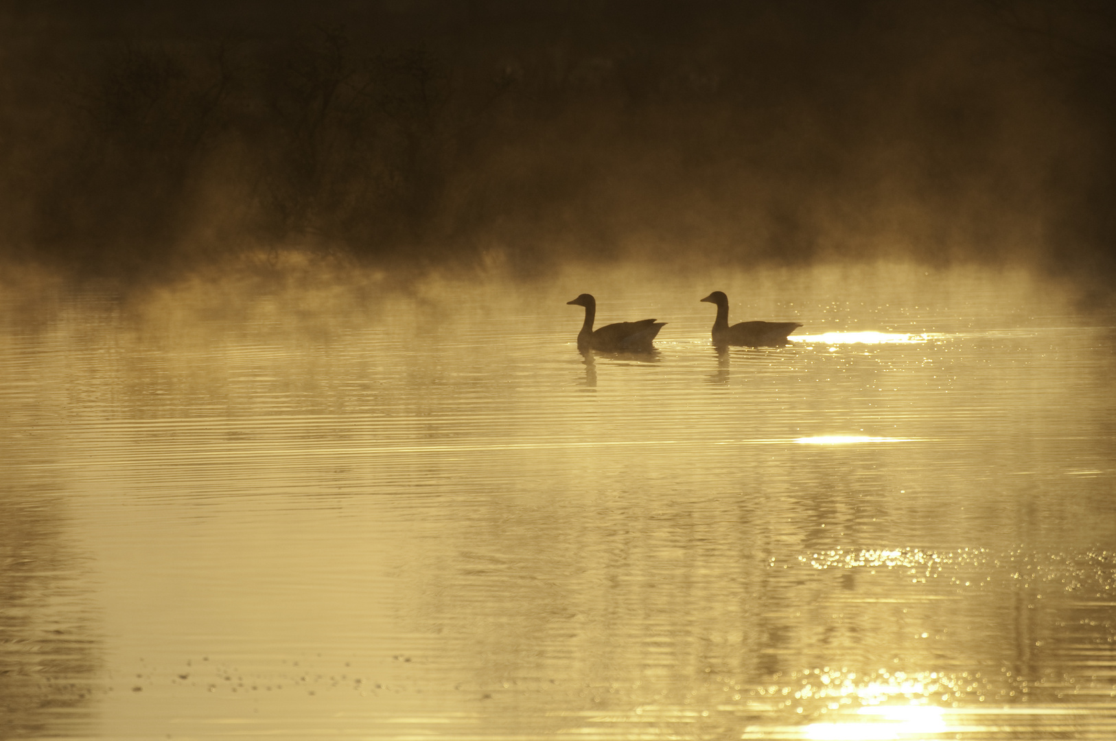 Früh Morgens am Moor